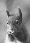 3. R SandersonSquirrel